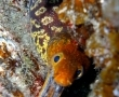 diving-tenerife-starfishbay-dive-site (13)