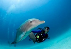 Diving-Tenerife-Dive-Packs-Dive-And-Sea-Tenerife