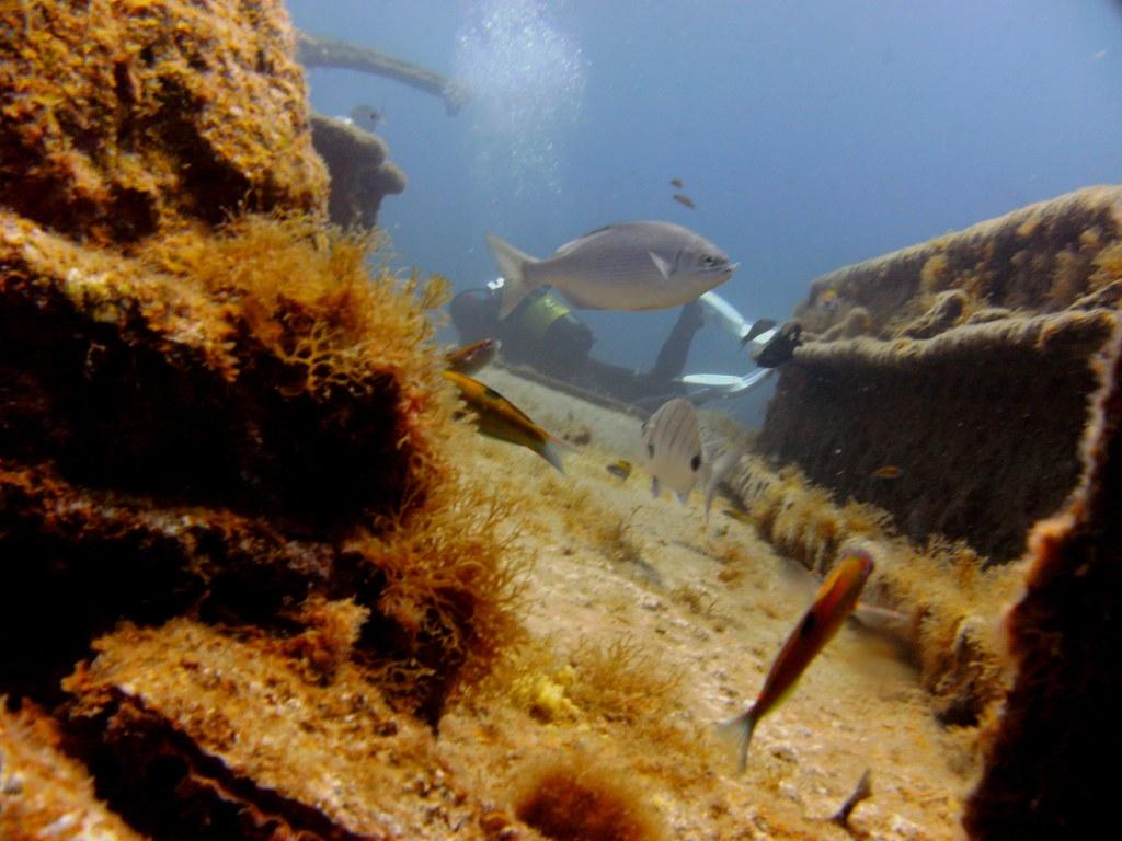 diving-tenerife-El-Condesito-Wreck-11