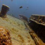 diving-tenerife-El-Condesito-Wreck-12