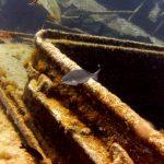 diving-tenerife-El-Condesito-Wreck-13