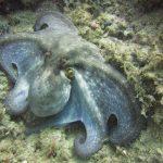 diving-tenerife-Montaña-Amarilla-dive-site-4