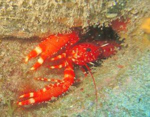 diving-tenerife-Montaña-Amarilla-dive-site-1