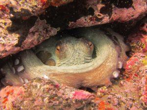 diving-tenerife-Montaña-Amarilla-dive-site-2
