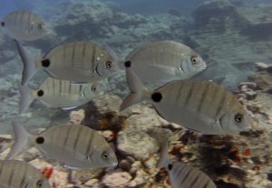 diving-tenerife-Nelsons-Point-dive-site-2
