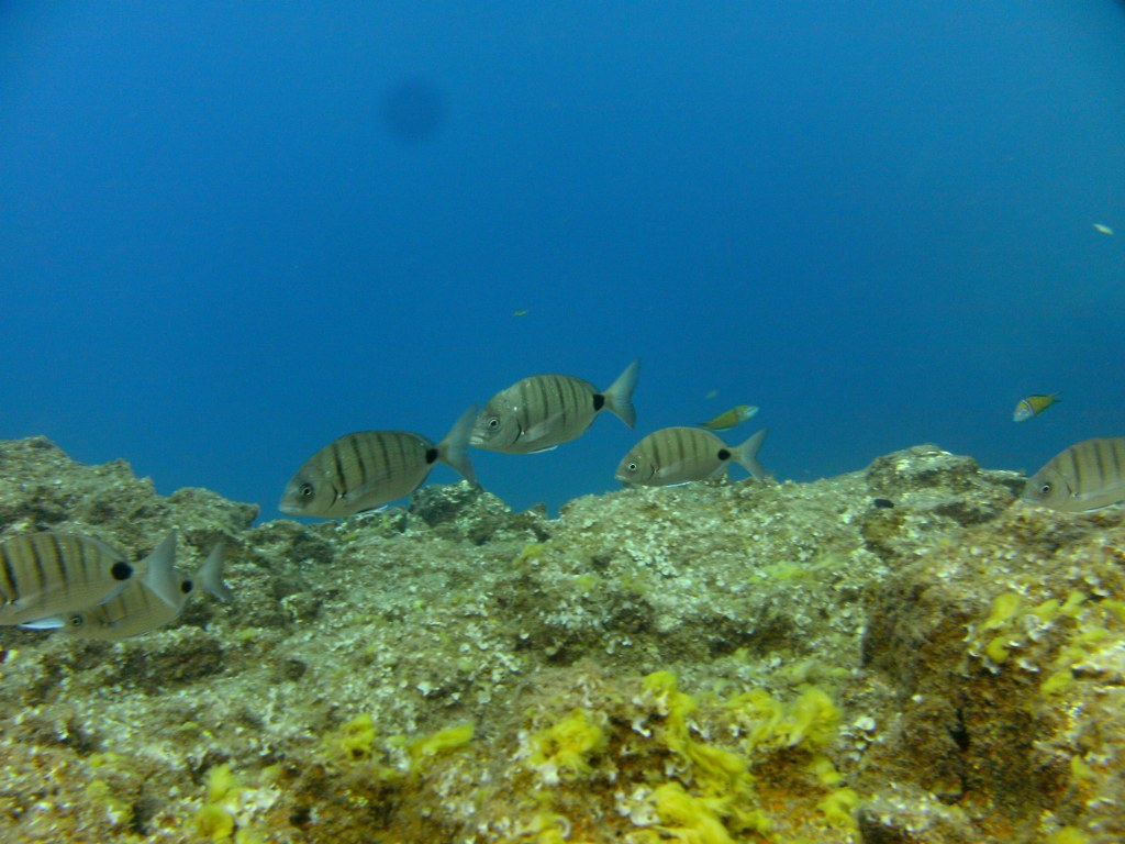 diving-tenerife-Nelsons-Point-dive-site-3