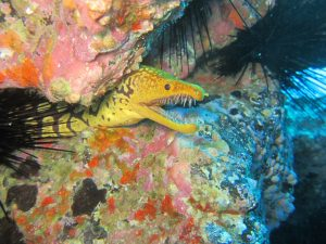 diving-tenerife-Nelsons-Point-dive-site-4