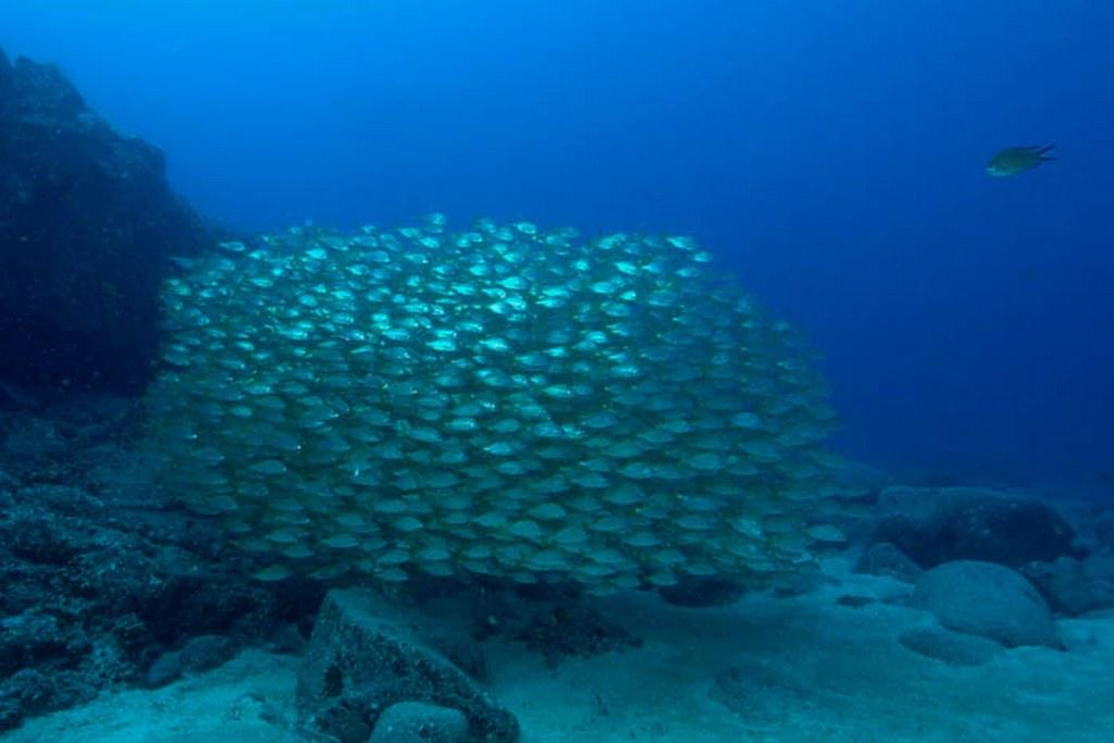 diving-tenerife-Punta-Rasca-Roncadores