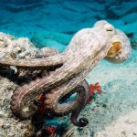 diving-tenerife-alien-rock-dive-site-1
