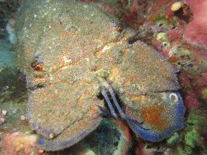 diving-tenerife-el-delfin-dive-site-2