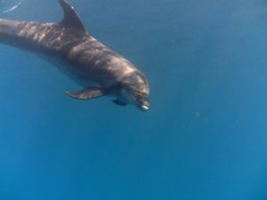 diving-tenerife-el-delfin-dive-site-5