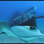 diving-tenerife-estorne-dive-site (2)