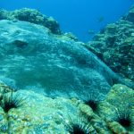 diving-tenerife-los=churchos-dive-site-1 (5)