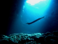 diving-tenerife-palm_mar_cave_tenerife_diving_site