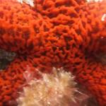 diving-tenerife-starfishbay-dive-site-23