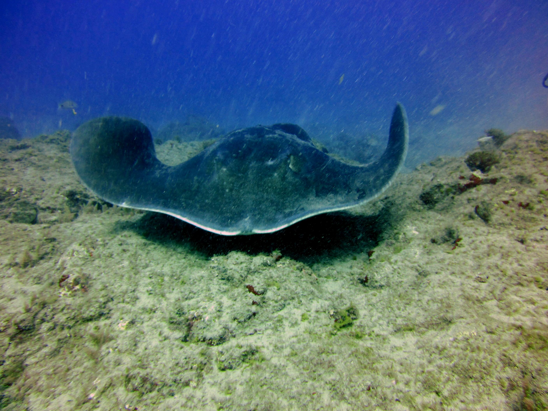 diving-tenerife=los-archos-dive-site (3)