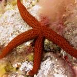 diving-tenerife-starfishbay-dive-site-10