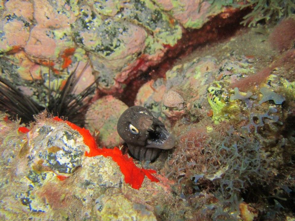 Night diving Tenerife 1