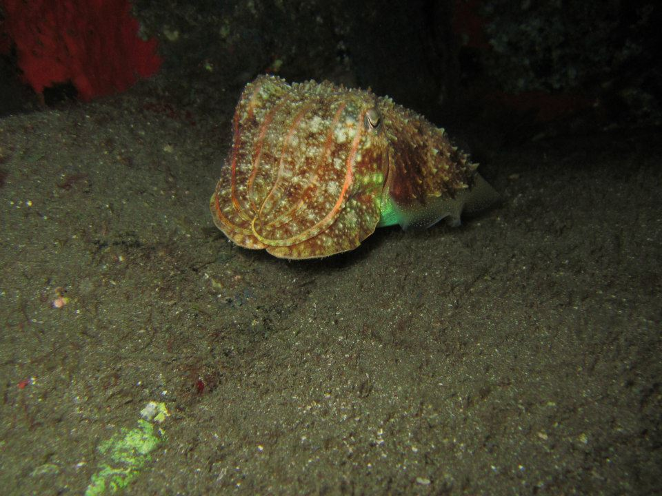 Night diving Tenerife