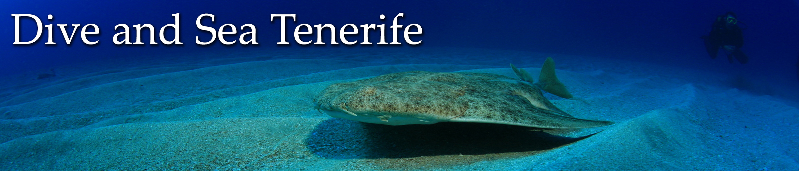 Diving in Tenerife-Dive-and-sea-tenerife-banner-angel-shark