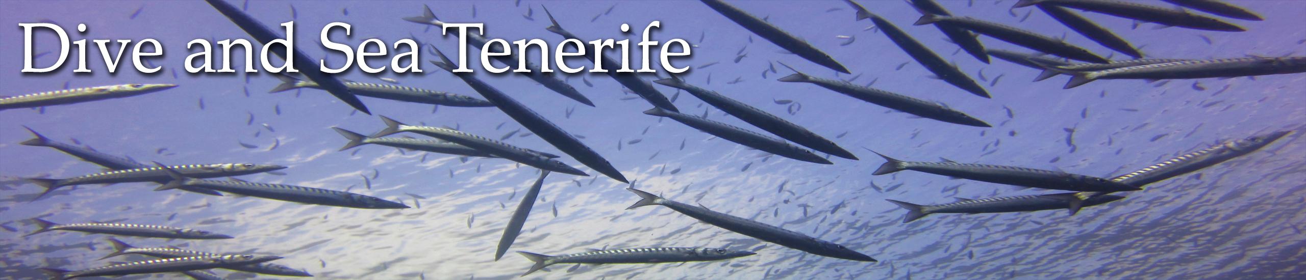 Diving in Tenerife-Dive-and-sea-tenerife-banner-barracuda