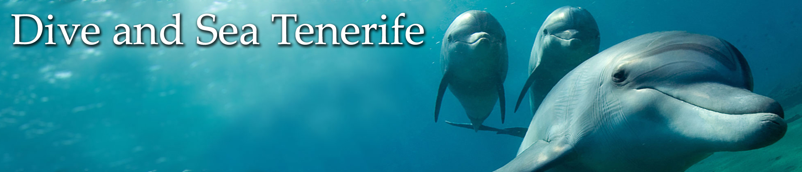 Diving in Tenerife-Dive-and-sea-tenerife-banner-dolphins