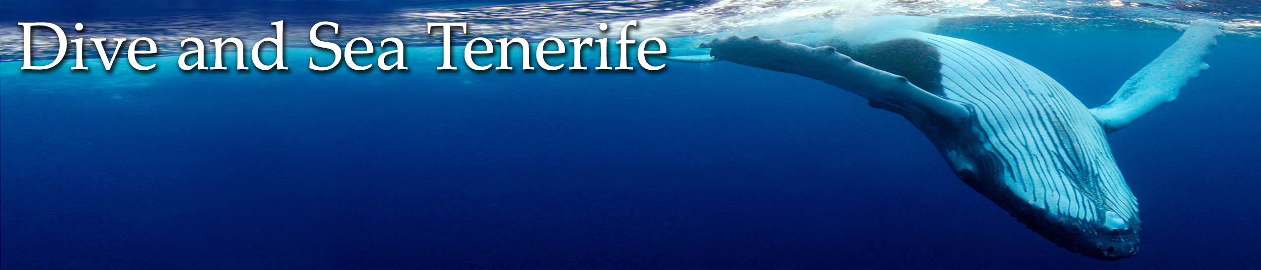 Diving in Tenerife-Dive-and-sea-tenerife-banner-humpback-whale