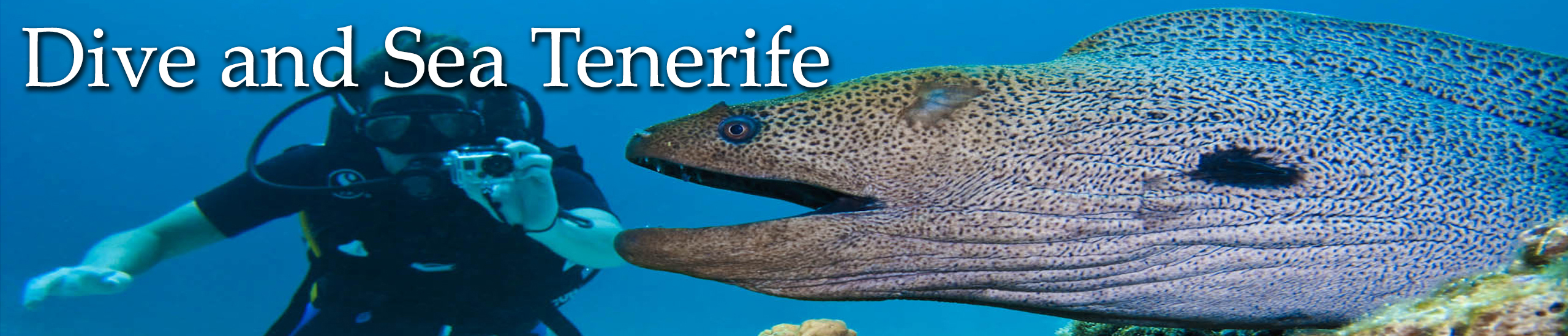 Diving in Tenerife-Dive-and-sea-tenerife-banner-moray-eel