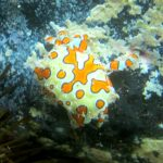Diving-Tenerife-Aquatic-Life-Sharks-Sting-Rays-Fish (111)