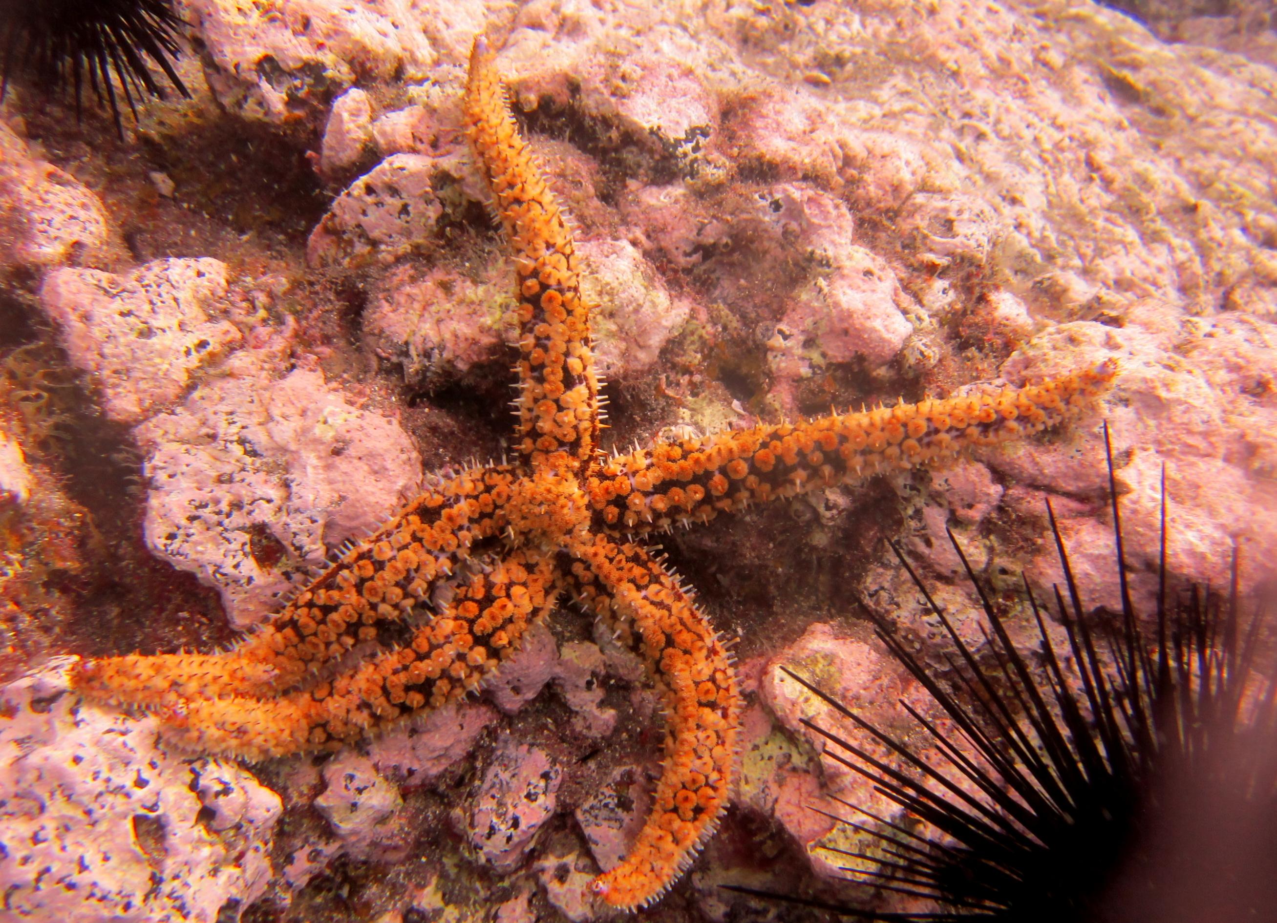 Diving-Tenerife-Aquatic-Life-Sharks-Sting-Rays-Fish (16)