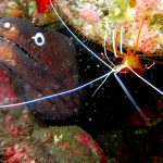 Diving-Tenerife-Aquatic-Life-Sharks-Sting-Rays-Fish (41)