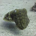 Diving-Tenerife-Aquatic-Life-Sharks-Sting-Rays-Fish (49)