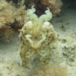 Diving-Tenerife-Aquatic-Life-Sharks-Sting-Rays-Fish (64)