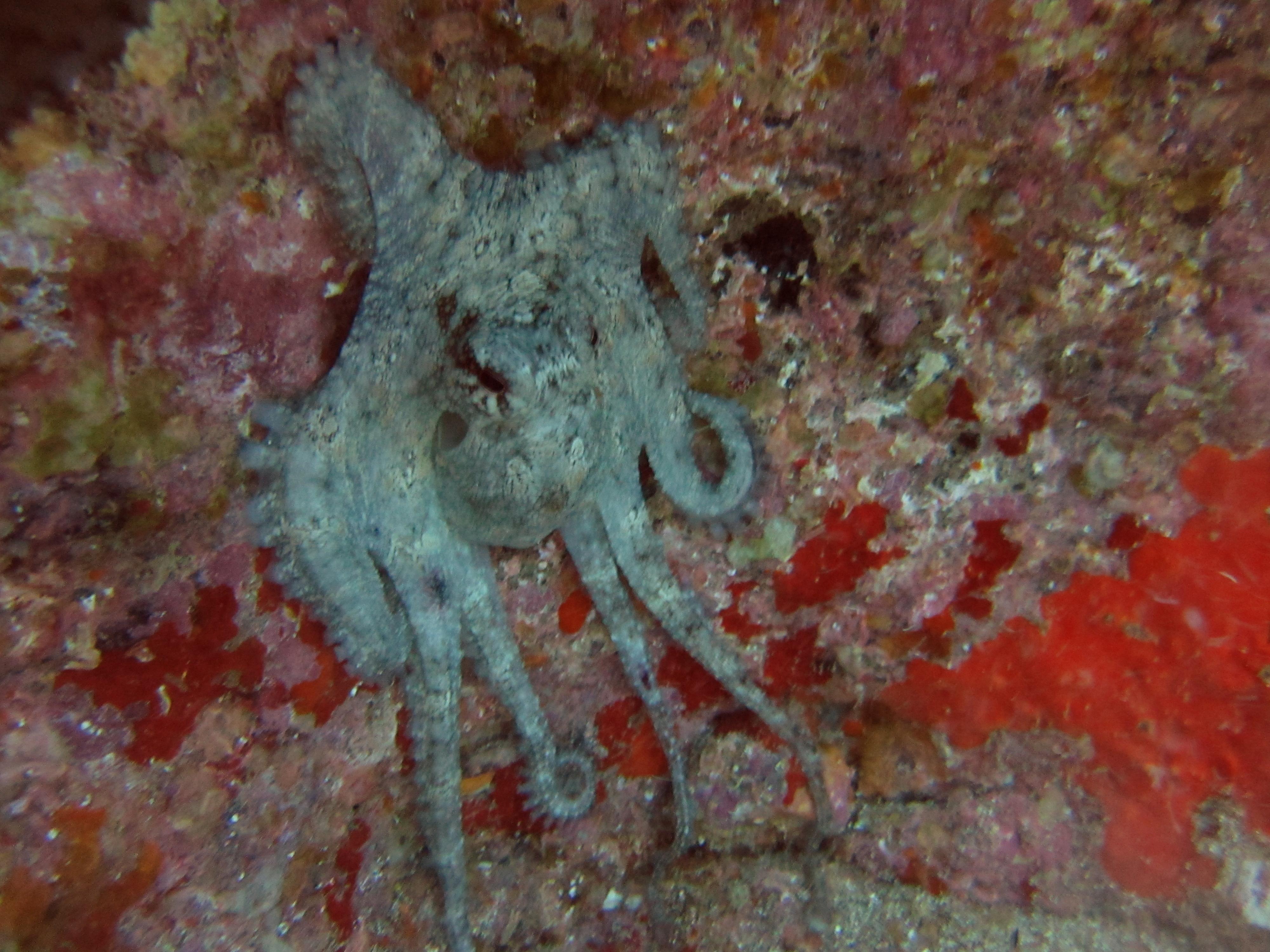 Diving-Tenerife-Aquatic-Life-Sharks-Sting-Rays-Fish (67)