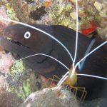 Diving-Tenerife-Aquatic-Life-Sharks-Sting-Rays-Fish (8)