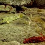 Diving-Tenerife-Aquatic-Life-Sharks-Sting-Rays-Fish (90)