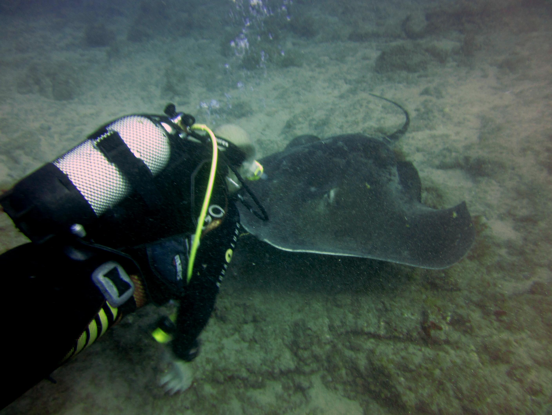 Diving-Tenerife-Divers (22)