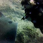 Diving-Tenerife-Divers (23)