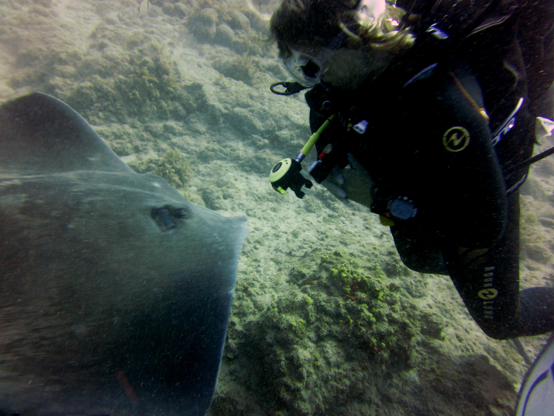 Diving-Tenerife-Divers (23)