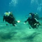 Diving-Tenerife-Divers (27)
