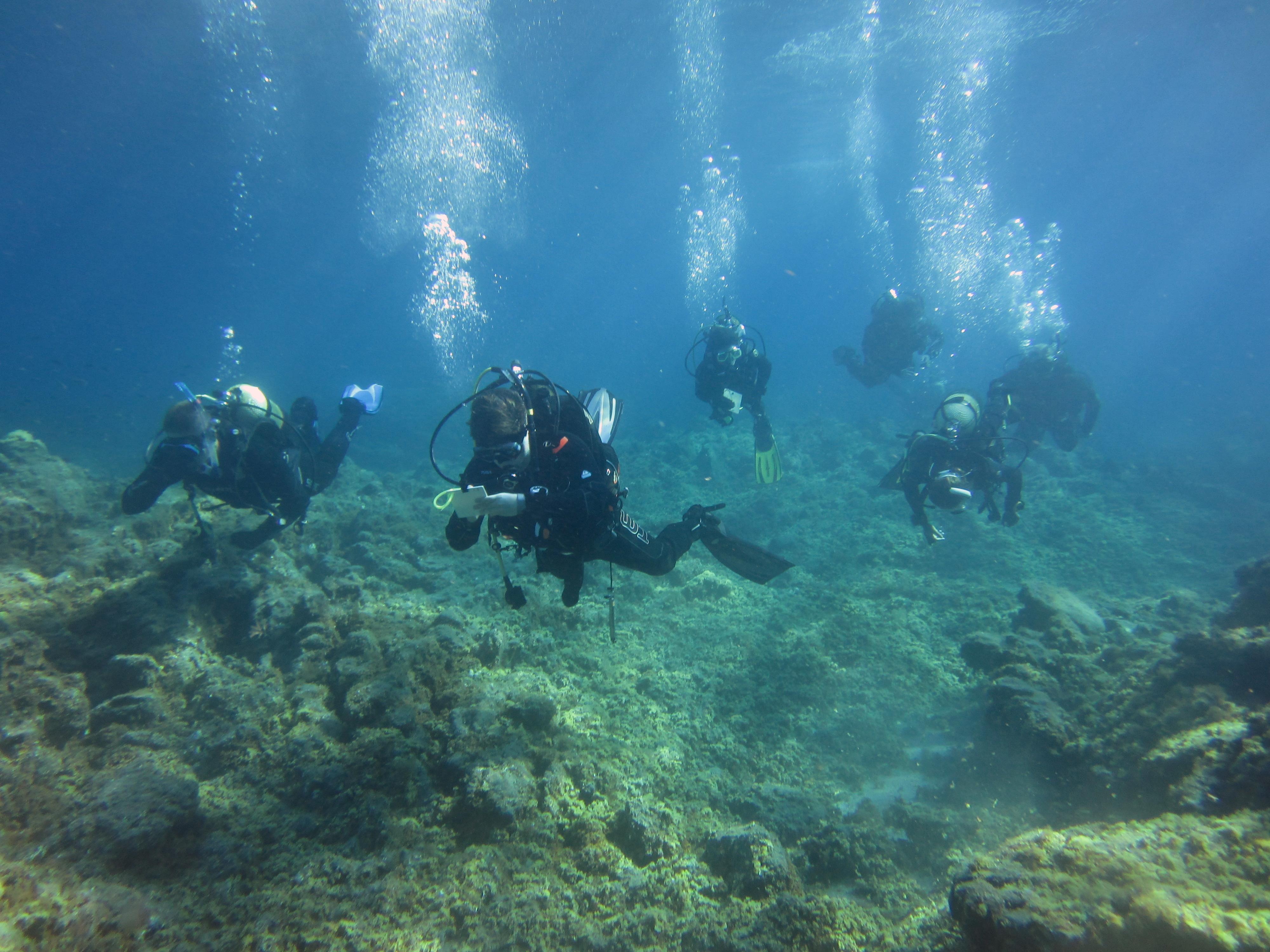 Diving-Tenerife-Divers (40)