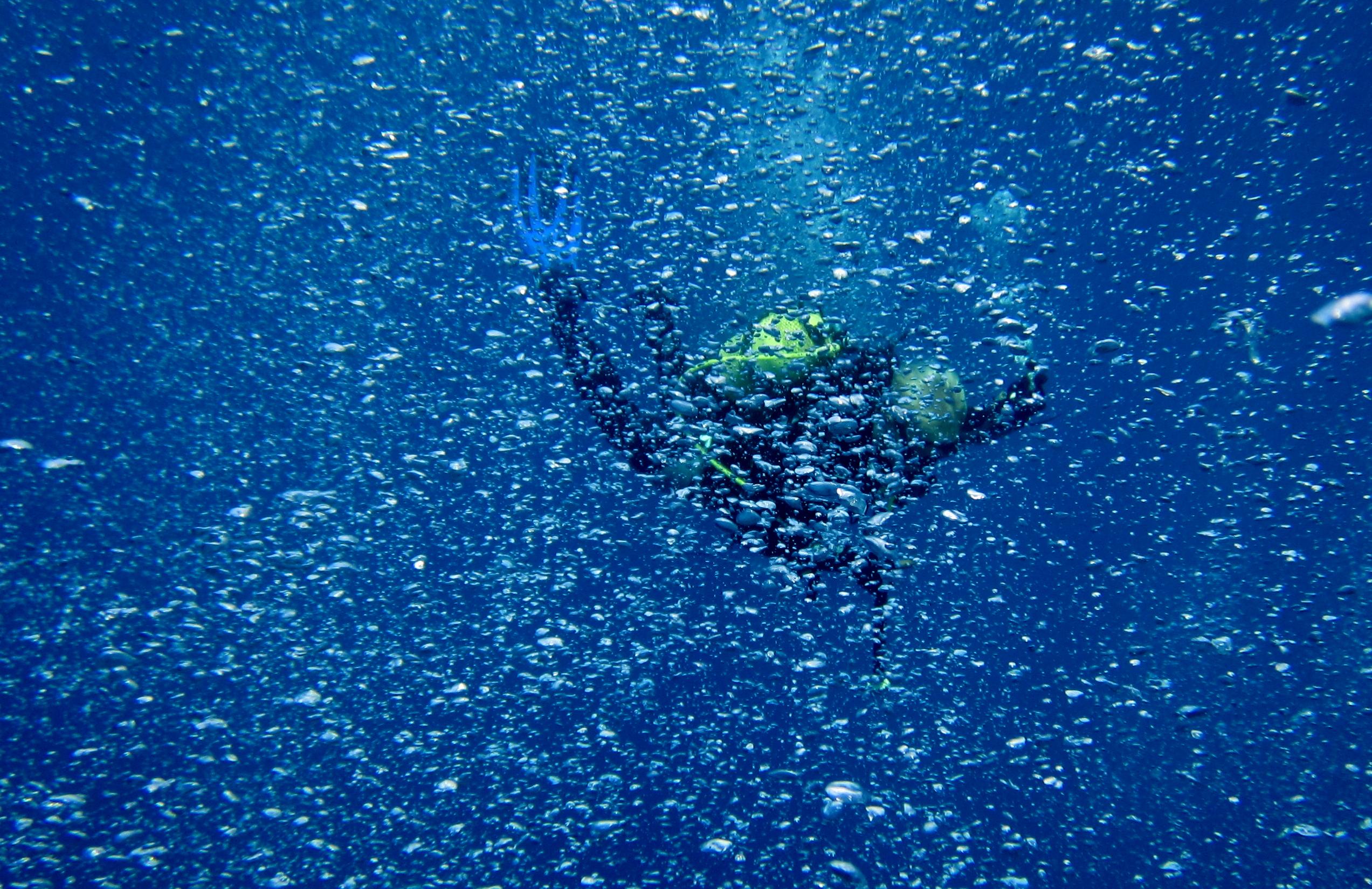 Diving-Tenerife-Divers (42)