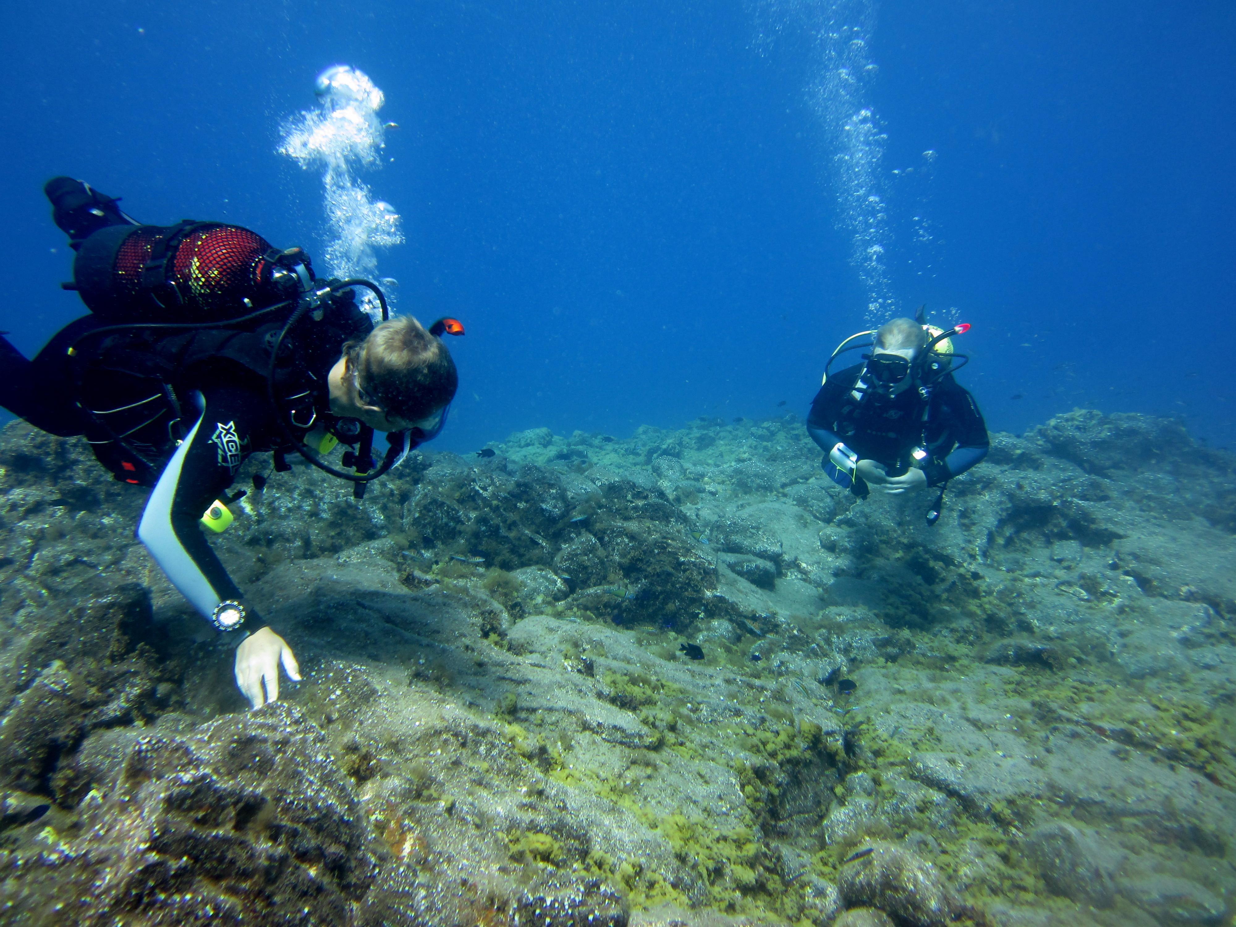 Diving-Tenerife-Divers (58)
