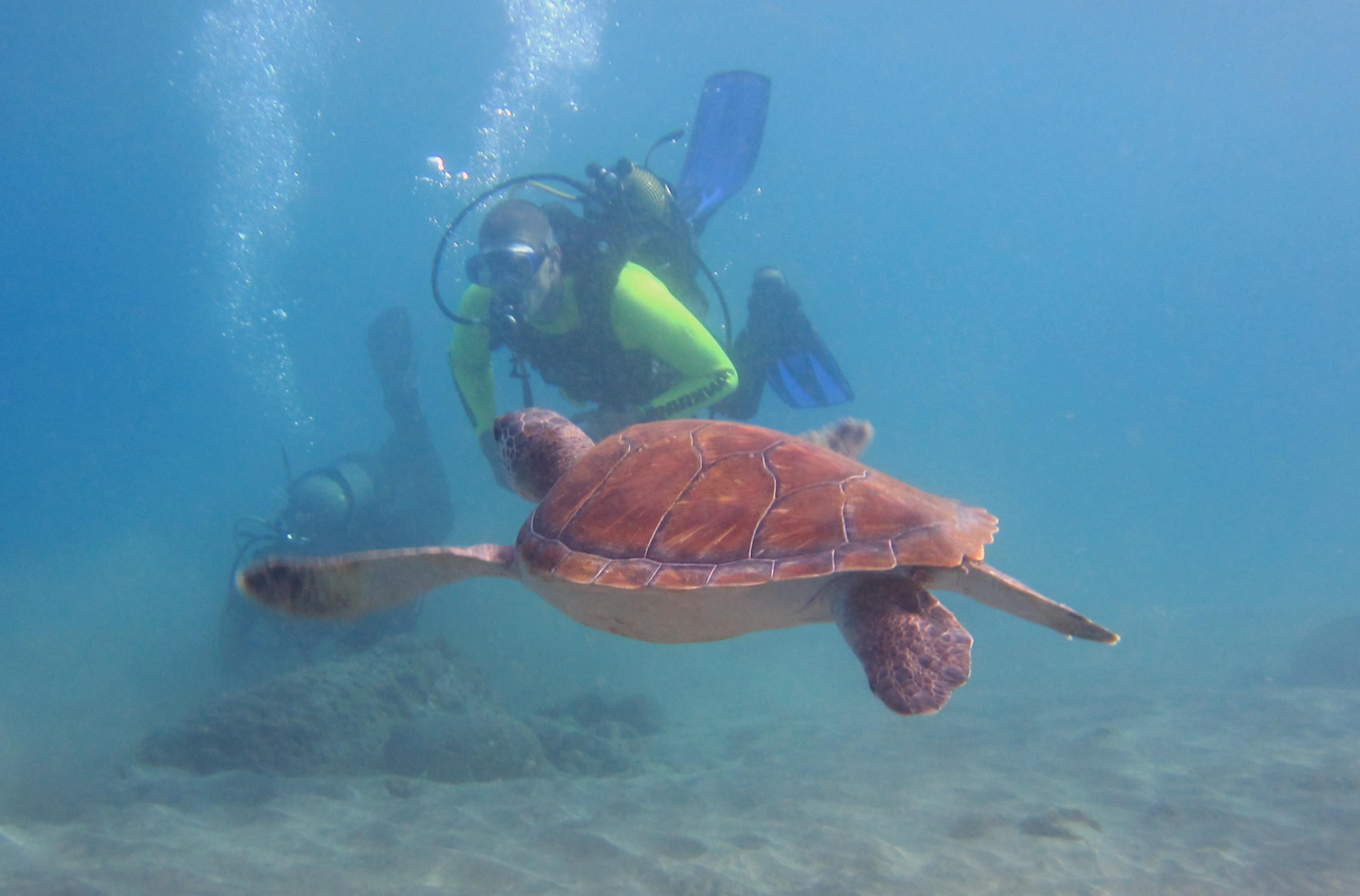 Diving-Tenerife-Divers (68)