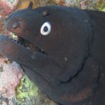 Diving-Tenerife-Moray-Eels-Fangtooth-Dive-And-Sea1