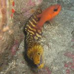 Diving-Tenerife-Moray-Eels-Fangtooth-Dive-And-Sea1 (2)