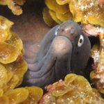 Diving-Tenerife-Moray-Eels-Fangtooth-Dive-And-Sea-Divemaster