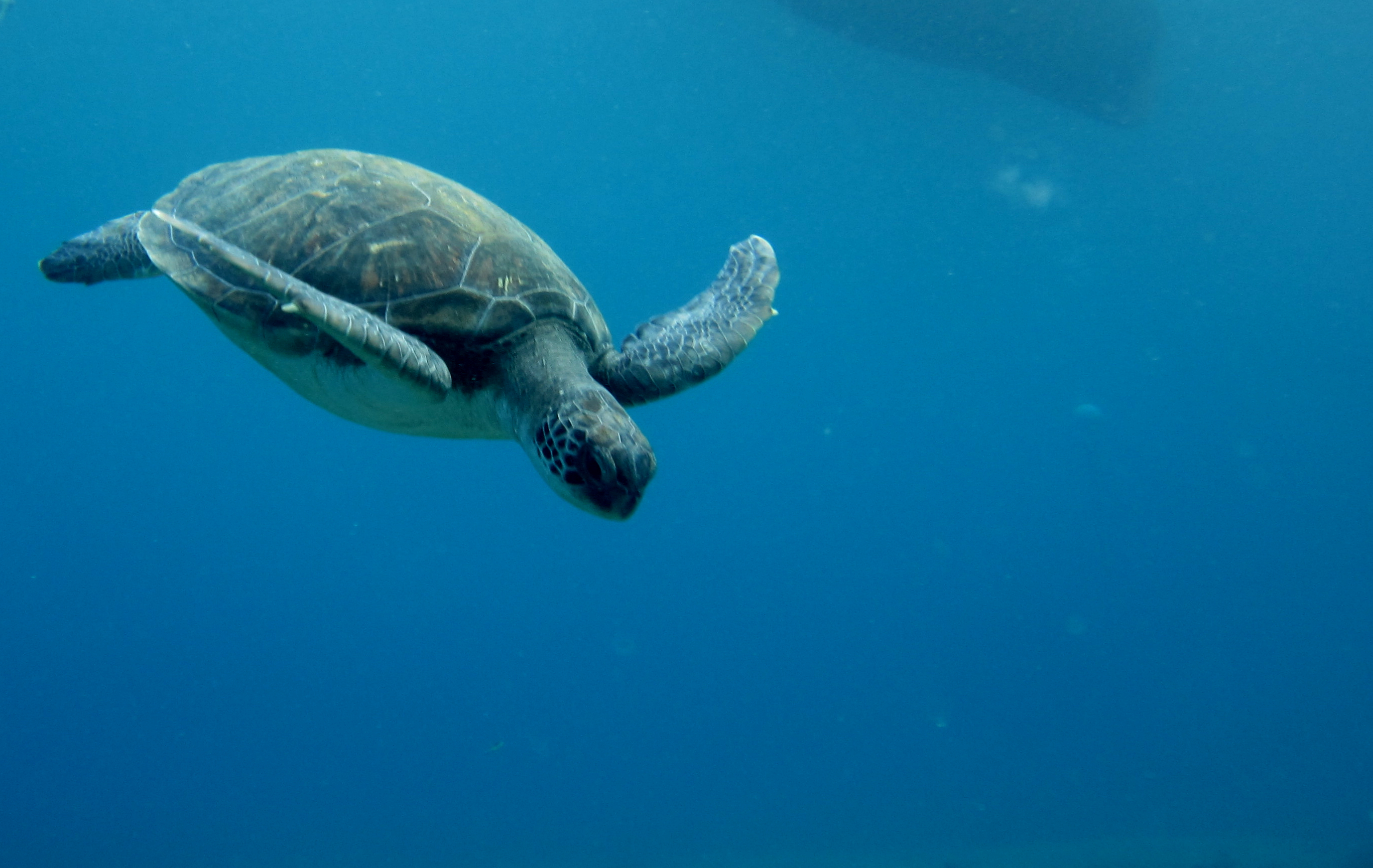 Diving-Tenerife-Turtles-1 (10)