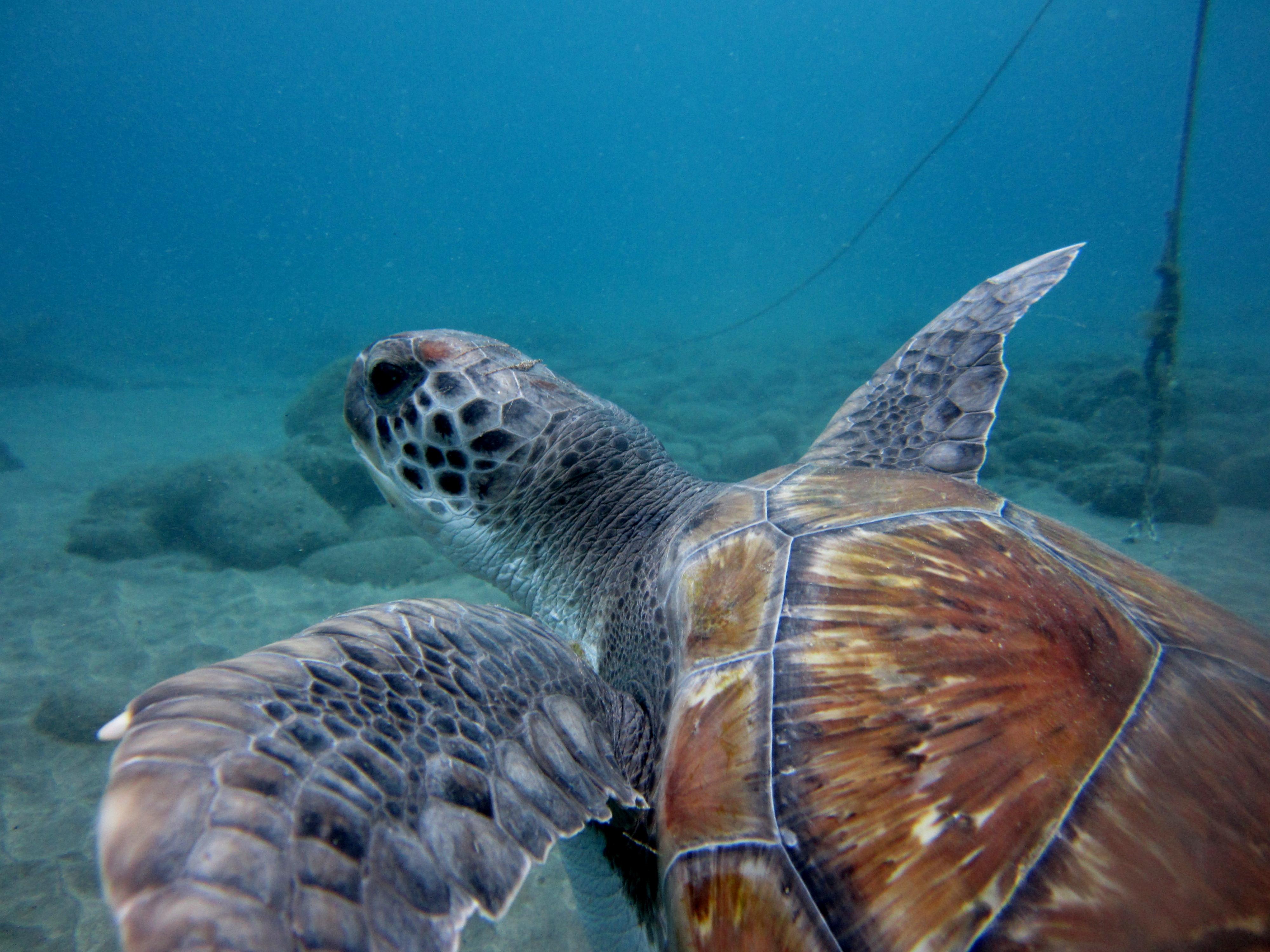 Diving-Tenerife-Turtles-1 (2)