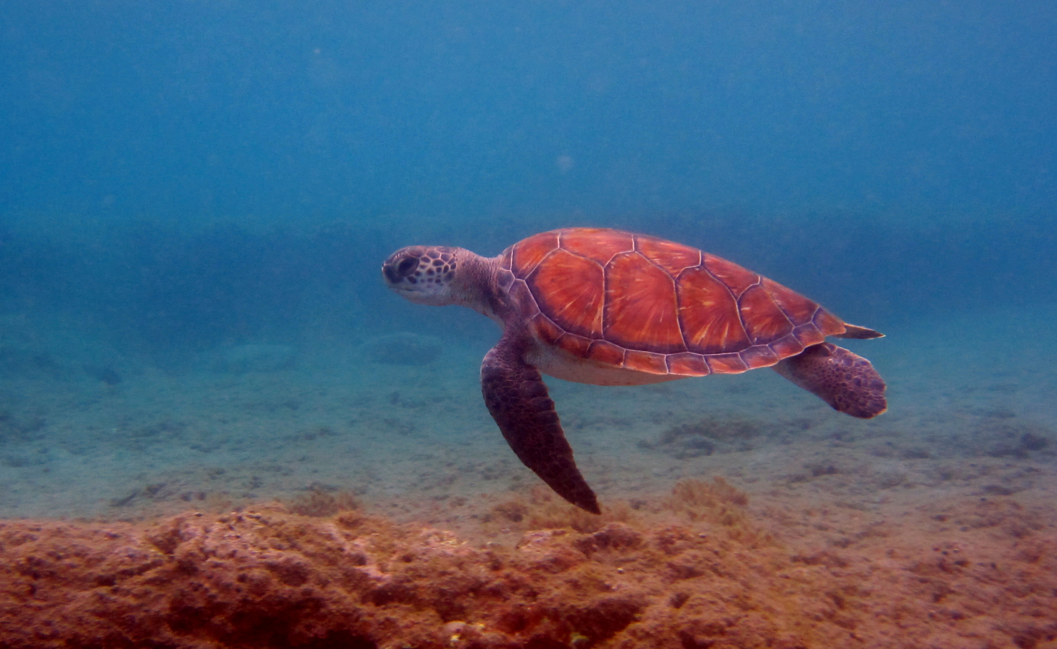 Diving-Tenerife-Turtles-1